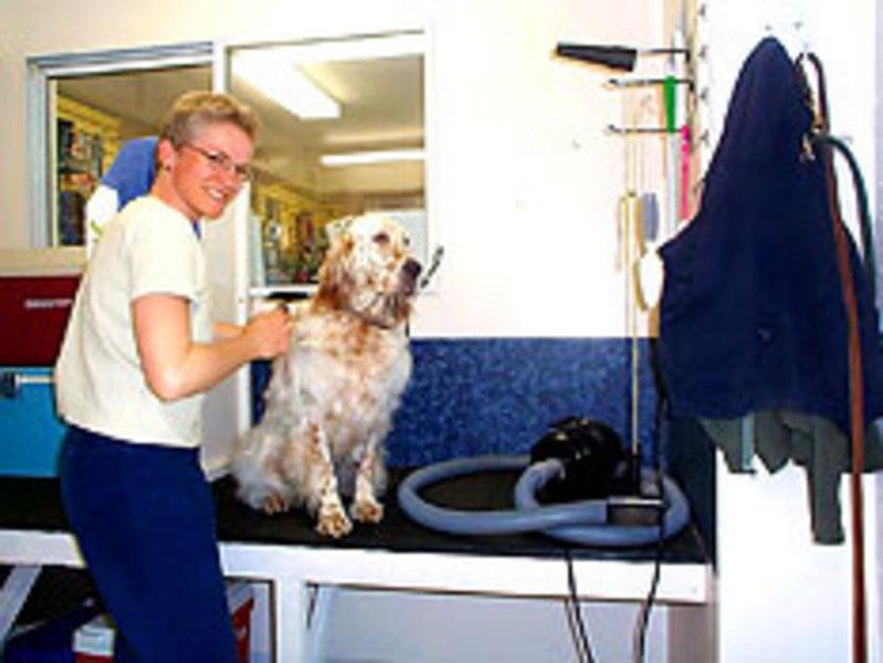 Dog Grooming Dundas