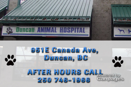 video Duncan Animal Hospital Ltd