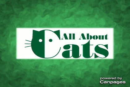video All About Cats Veterinary Clinic