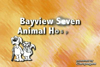 video Bayview Seven Animal Hospital