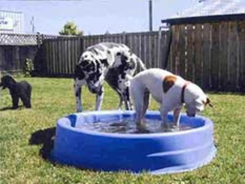 Dog N Suds Pet Services Ltd
