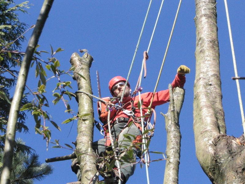 photo Monkey Tree Services