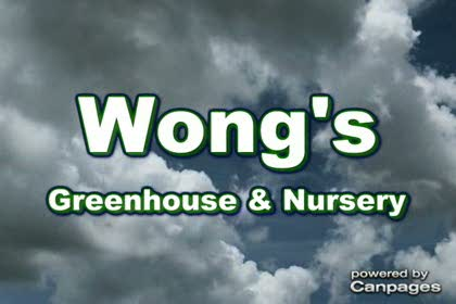 video Wong's Greenhouse & Nursery