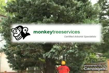 video Monkey Tree Services