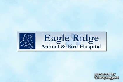 video Eagle Ridge Animal & Bird Hospital
