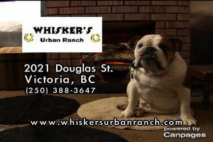 video Whisker's Urban Ranch Pet Daycamp Co